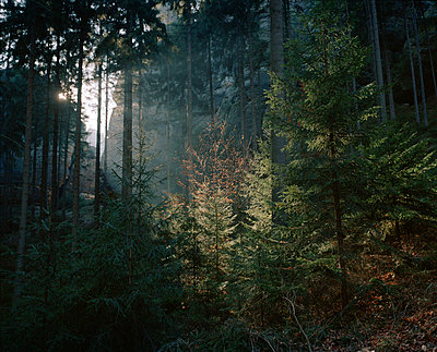Mixed forest - p962m1124954 by Robert Schlossnickel
