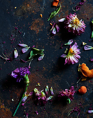 Vertrocknete Blumen - p1397m2054653 von David Prince