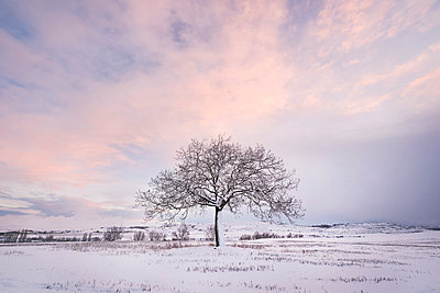 Spain, sunset in winter landscape with single bare tree - p300m1536223 by David Herraez Calzada
