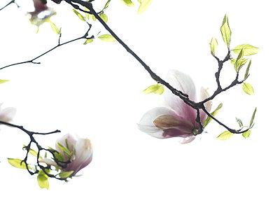 Frühling - p6060565 von Iris Friedrich