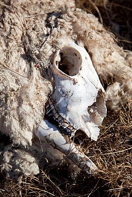 Skull - p628m764191 by Franco Cozzo