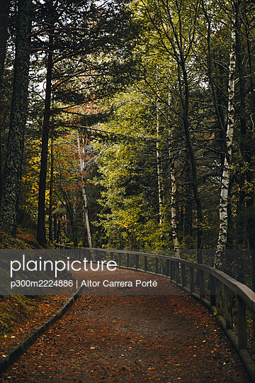 Empty footpath in autumn forest - p300m2224886 by Aitor Carrera Porté