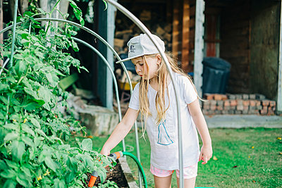 Young girl watering tomato plants in the backyard - p1166m2208062 by Cavan Images