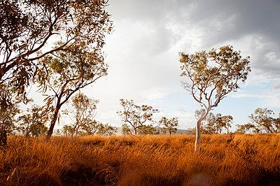 Baum im Outback - p1273m1110962 von melanka