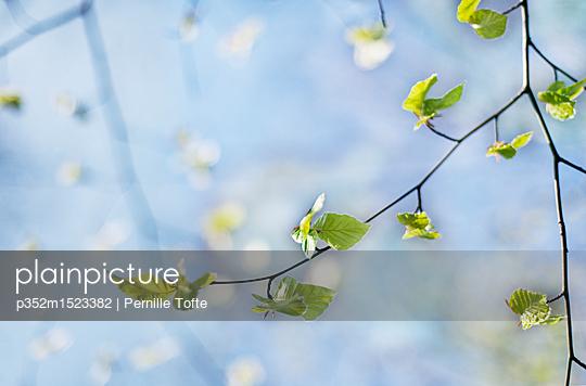 p352m1523382 von Pernille Tofte