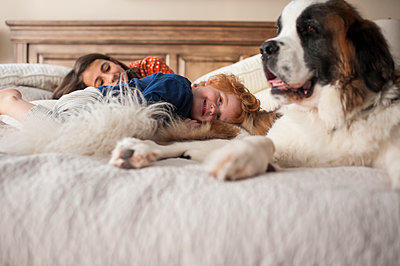 Kids smiling while laying on bed with large dog at home - p1166m2136734 by Cavan Images