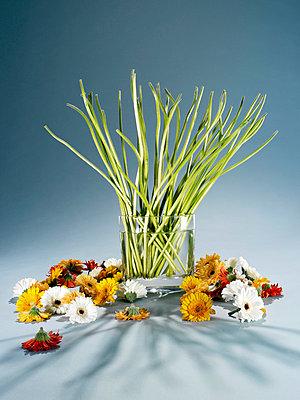 Blumen haben Kopf verloren - p8510004 von Lohfink