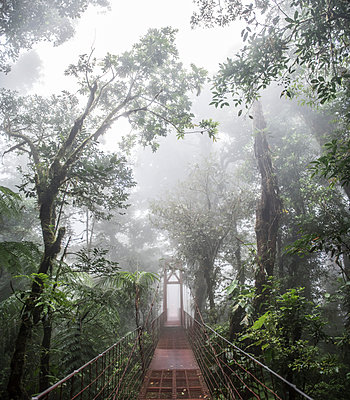 A bridge in the Monteverde Cloud Forest biological reserve Costa Rica - p1166m2153512 by Cavan Images