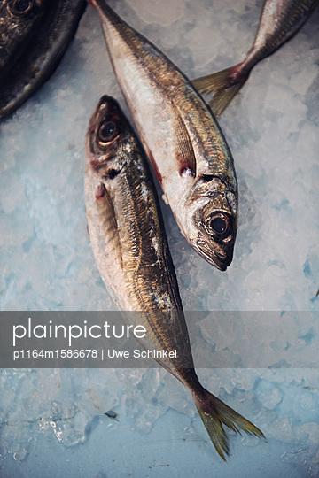 Frischer Fisch - p1164m1586678 von Uwe Schinkel