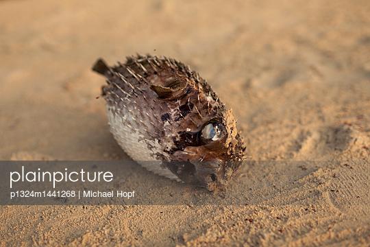Dead fish on shore - p1324m1441268 by Michael Hopf