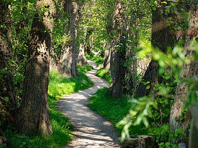 Forest road - p299m2126153 by Silke Heyer