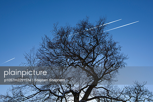 A leafless tree with blue sky and jet aeroplane trails passing by overhead. - p1057m2291534 by Stephen Shepherd