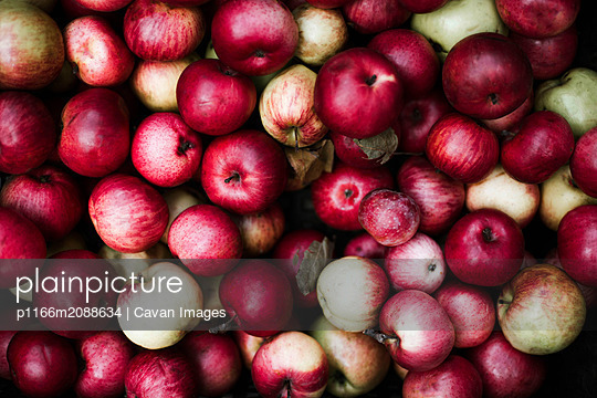 Harvested red apples  at a market. - p1166m2088634 by Cavan Images