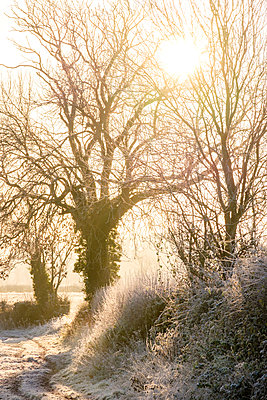Great Britain, Early morning mist shrouds trees covered in frost  - p1057m2228689 by Stephen Shepherd