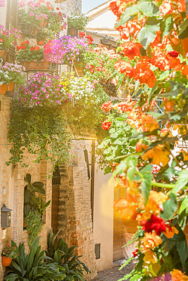 Blumen in Spello - p1275m2107431 von cgimanufaktur
