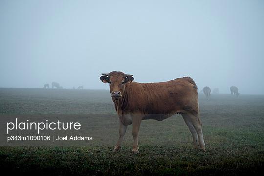 p343m1090106 von Joel Addams