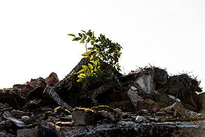 Wachstum - p220m1220730 von Kai Jabs