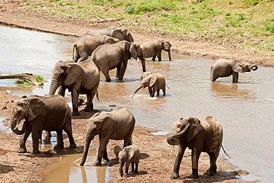 Elefanten im Sand - p5330254 von Böhm Monika
