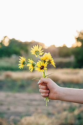 Hand Holding Sunflowers - p1262m1444507 by Maryanne Gobble