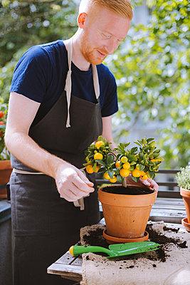 Gärtner auf dem Balkon - p1396m1578344 von Hartmann + Beese