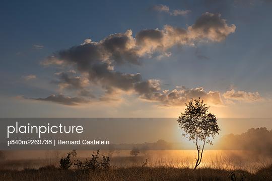 Sun shining through tree at dawn. Klein Schietveld, Brasschaat, Belgium. July 2019. - p840m2269738 by Bernard Castelein