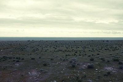 Steppe mit grasenden Pferden, Usbekistan - p1189m2176159 von Adnan Arnaout