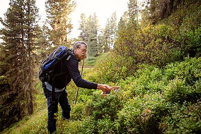 Heidelbeerenernte in den Bergen  - p1222m2126485 von Jérome Gerull