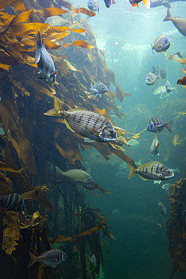 Two Oceans Aquarium, biodiversity - p1640m2246211 by Holly & John