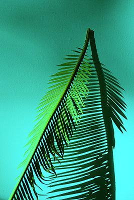 Green palm leaf - p258m2278663 by Katarzyna Sonnewend