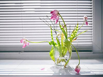 Schlappe Tulpen - p2560042 von Anton Badin