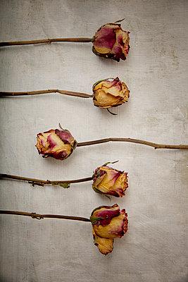 5 getrocknete Rosen - p451m1559083 von Anja Weber-Decker
