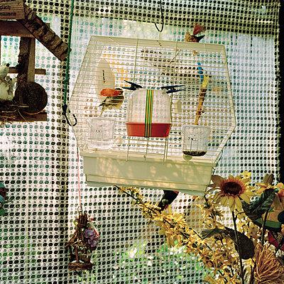 Vogelkäfig - p949m694773 von Frauke Schumann