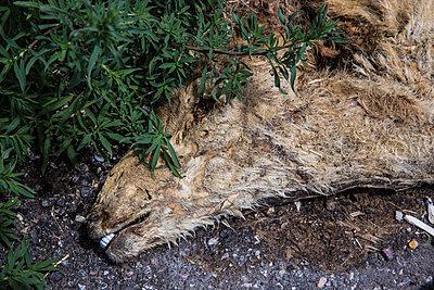 Dead Deer - p1291m1465565 by Marcus Bastel