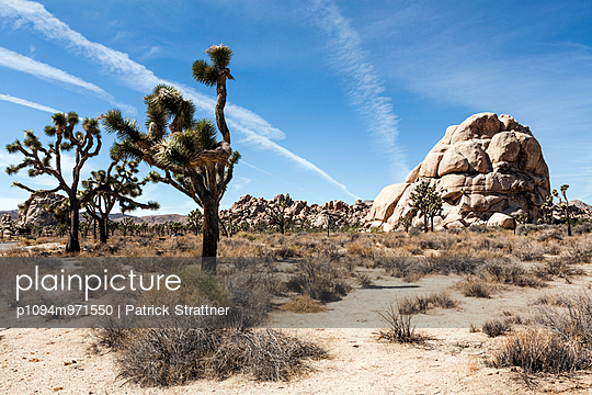 Joshua Tree National Park - p1094m971550 by Patrick Strattner
