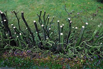 Gartenhecke - p417m886551 von Pat Meise