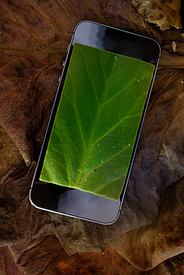 Smartphone display on autumn leaves - p676m1525953 by Rupert Warren