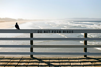 A pigeon sitting on a railing with DO NOT FEED BIRDS on the Pismo Beach pier, California - p1094m890299 by Patrick Strattner