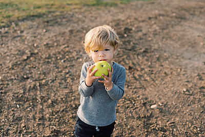 Little boy happily munching on his self picked apple. - p1166m2151890 by Cavan Images