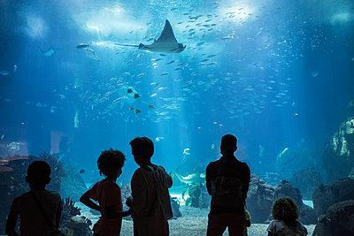 Aquarium  - p1307m2295538 by Agnès Deschamps