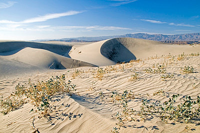 Sand dunes in the Coachella Valley Preserve, California, United States of America - p4429402f by Design Pics