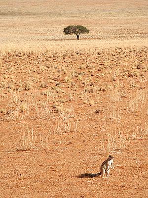 Namibia - p8870042 von Christian Kuhn
