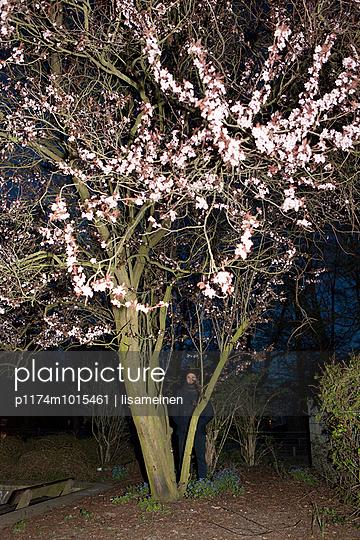 Hinter dem Kirschbaum - p1174m1015461 von lisameinen