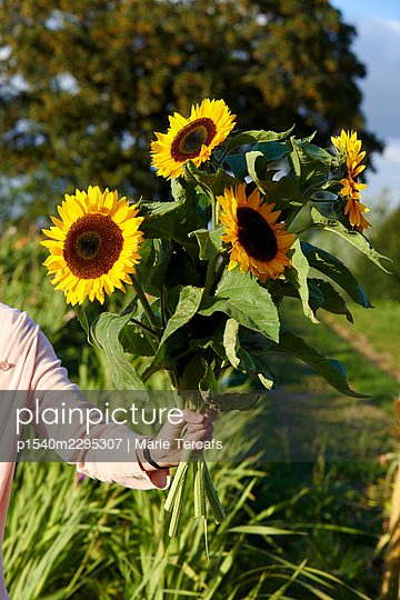 Hand holding bouquet with sunflowers - p1540m2295307 by Marie Tercafs