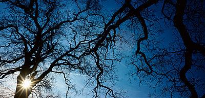 Die Sonne scheint - p1016m766978 von Jochen Knobloch