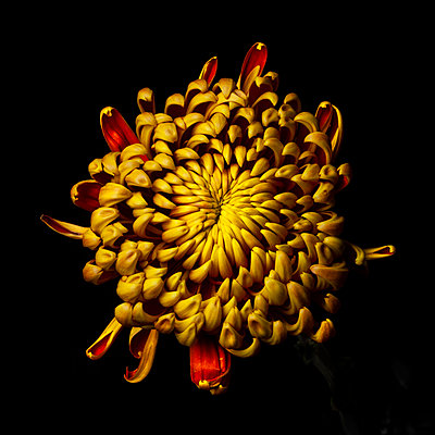 Yellow flower - p1088m2116294 by Martin Benner
