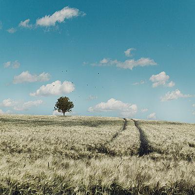 Barley field and tree, Wuppertal, Germany - p300m2274500 by Dirk Wüstenhagen