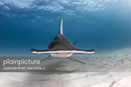p429m2019195 von Ken Kiefer 2