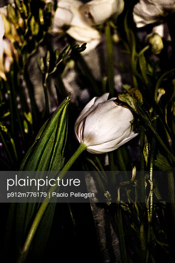 p912m776179 von Paolo Pellegrin