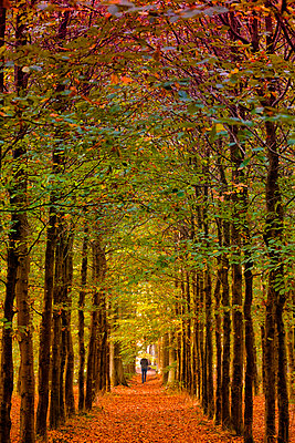 Germany, walker on autumnal forest track - p300m1517167 by Artmedia