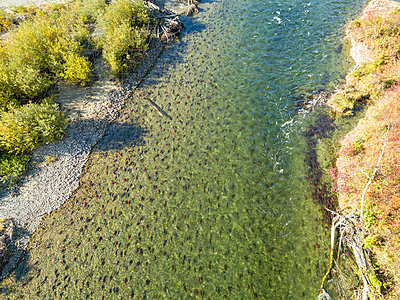 Canada, British Columbia, Aerial view of Adams River during salmon run - p300m2083435 by Gerald Nowak